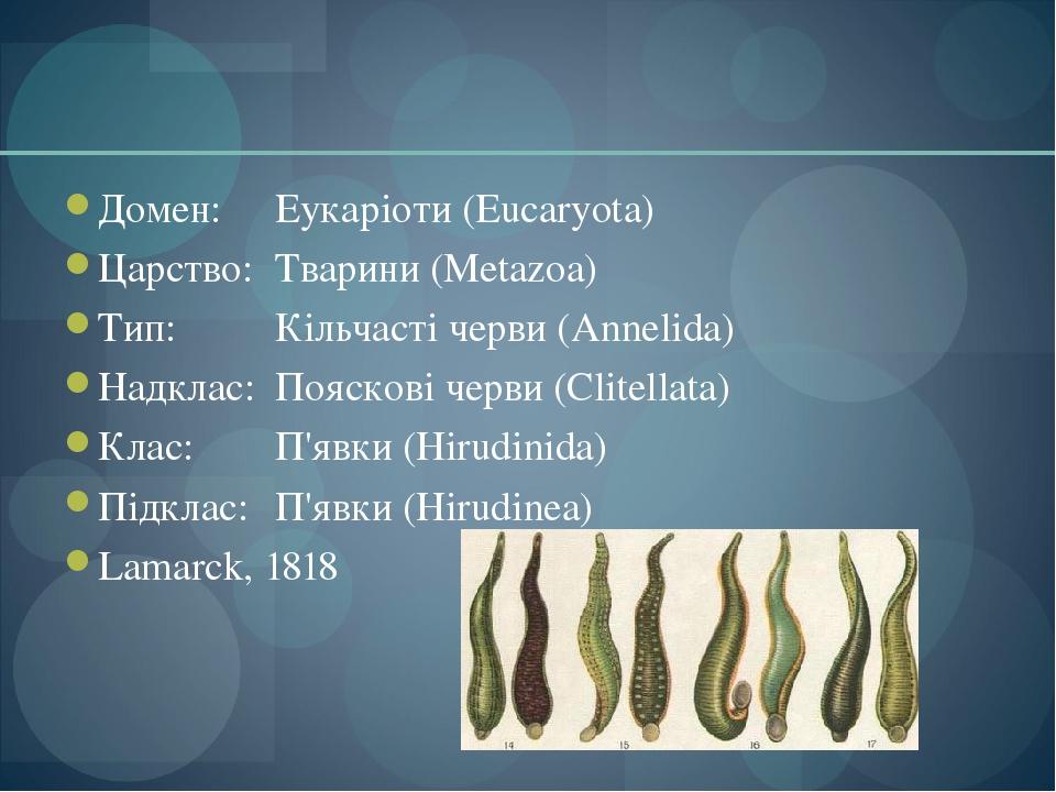 Домен: Еукаріоти (Eucaryota) Царство: Тварини (Metazoa) Тип: Кільчасті черви (Annelida) Надклас: Пояскові черви (Clitellata) Клас: П'явки (Hirudini...
