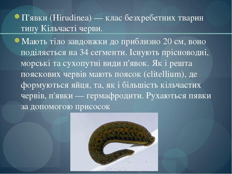 П'явки (Hirudinea) — клас безхребетних тварин типу Кільчасті черви. Мають тіло завдовжки до приблизно 20 см, воно поділяється на 34 сегменти. Існую...