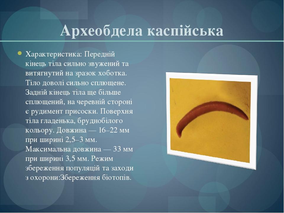 Археобдела каспійська Характеристика: Передній кінець тіла сильно звужений та витягнутий на зразок хоботка. Тіло доволі сильно сплющене. Задній кін...