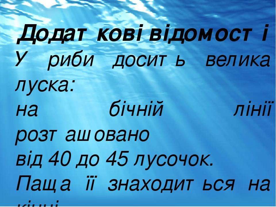 Додаткові відомості У риби досить велика луска: на бічній лінії розташовано від 40 до 45 лусочок. Паща її знаходиться на кінці морди.