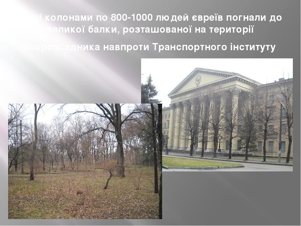 Далі колонами по 800-1000 людей євреїв погнали до великої балки, розташованої на території лісорозсадника навпроти Транспортного інституту