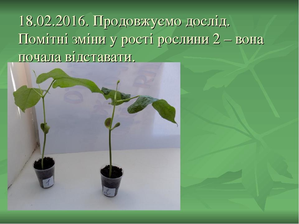 18.02.2016. Продовжуємо дослід. Помітні зміни у рості рослини 2 – вона почала відставати.