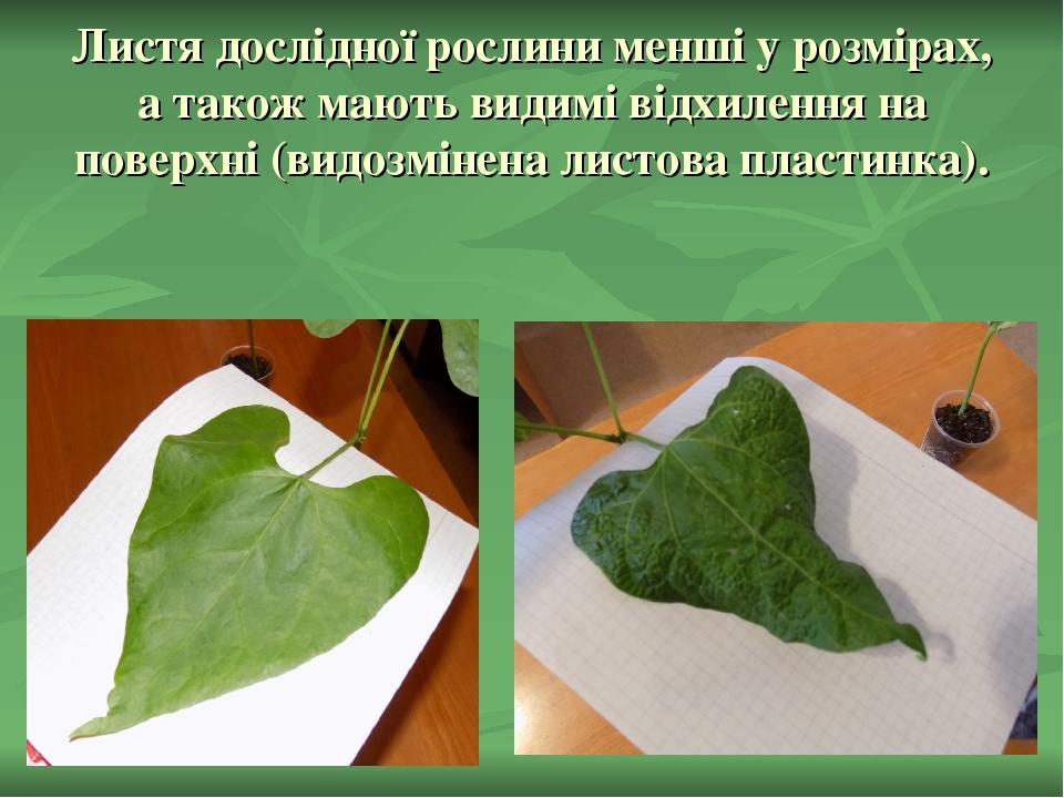 Листя дослідної рослини менші у розмірах, а також мають видимі відхилення на поверхні (видозмінена листова пластинка).