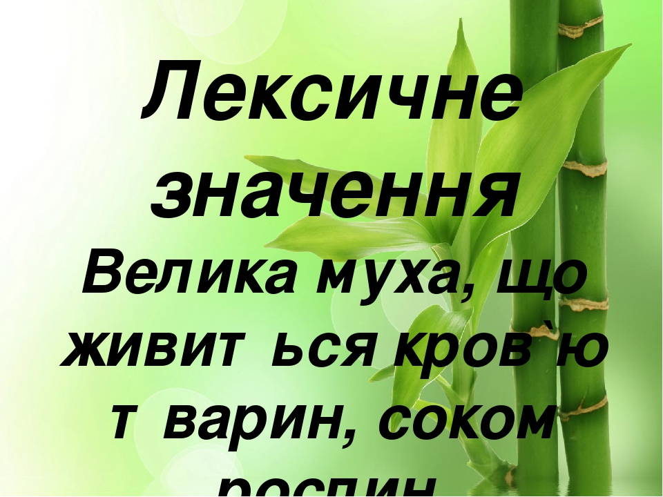 Лексичне значення Велика муха, що живиться кров`ю тварин, соком рослин.