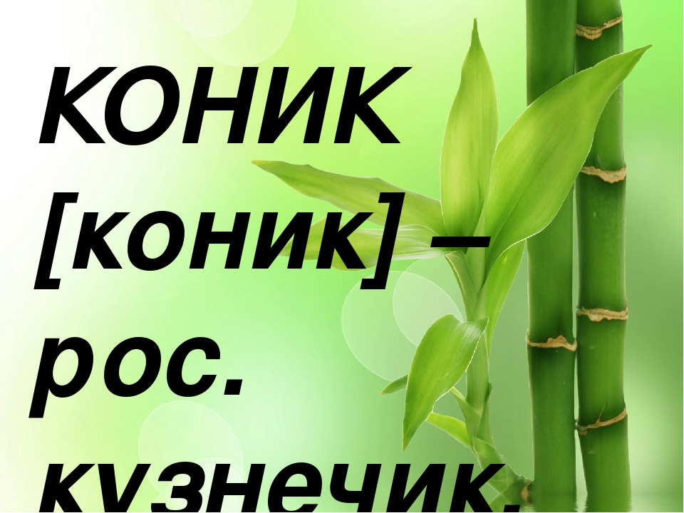 КОНИК [коник] – рос. кузнечик.