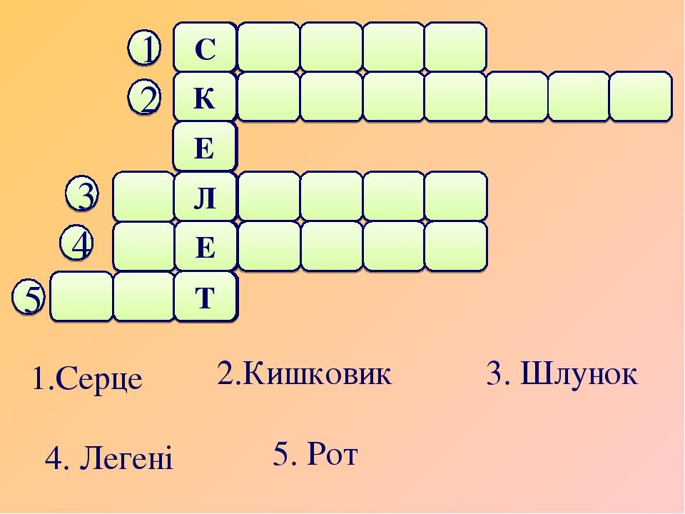 1.Серце 2.Кишковик 3. Шлунок 4. Легені 5. Рот С К Е Л Е Т 1 2 3 4 5