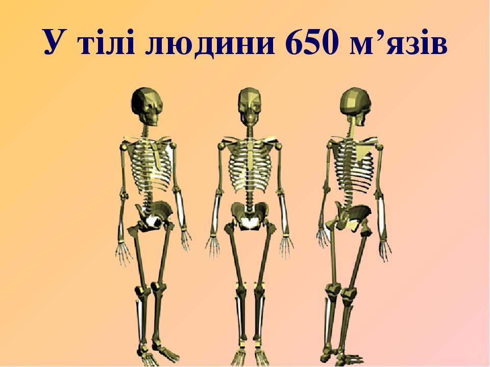 У тілі людини 650 м'язів