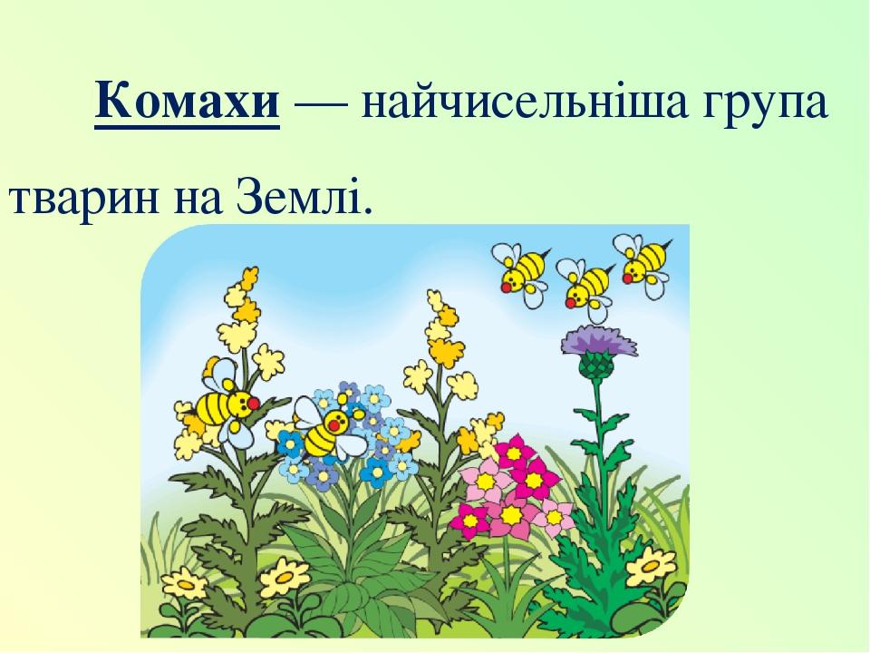 Комахи — найчисельніша група тварин на Землі.