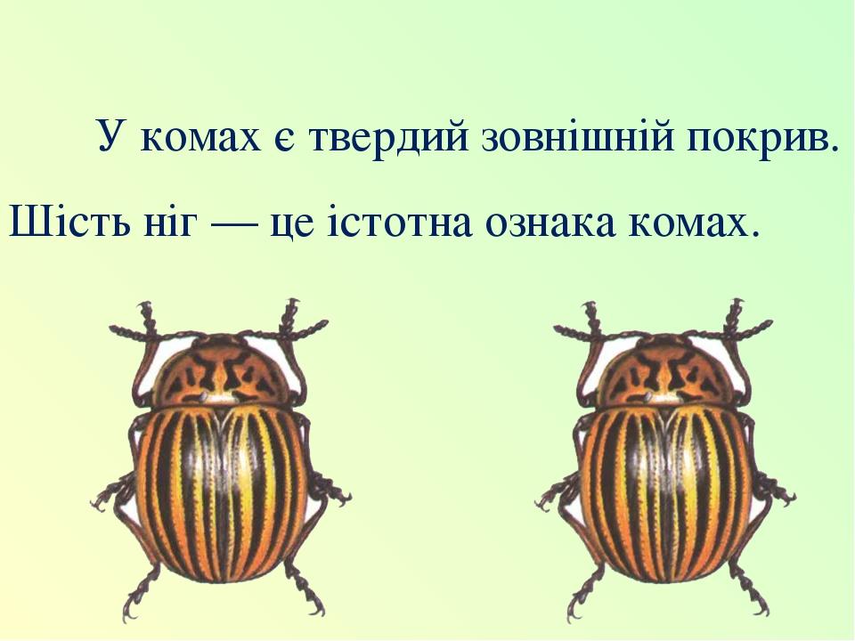У комах є твердий зовнішній покрив. Шість ніг — це істотна ознака комах.