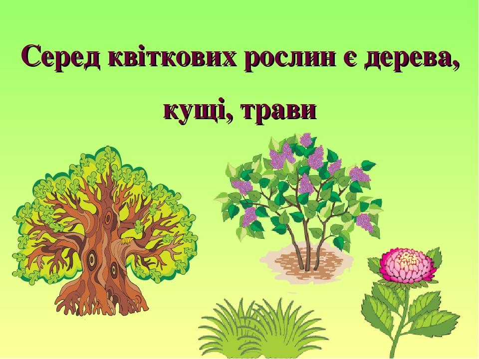 Серед квіткових рослин є дерева, кущі, трави