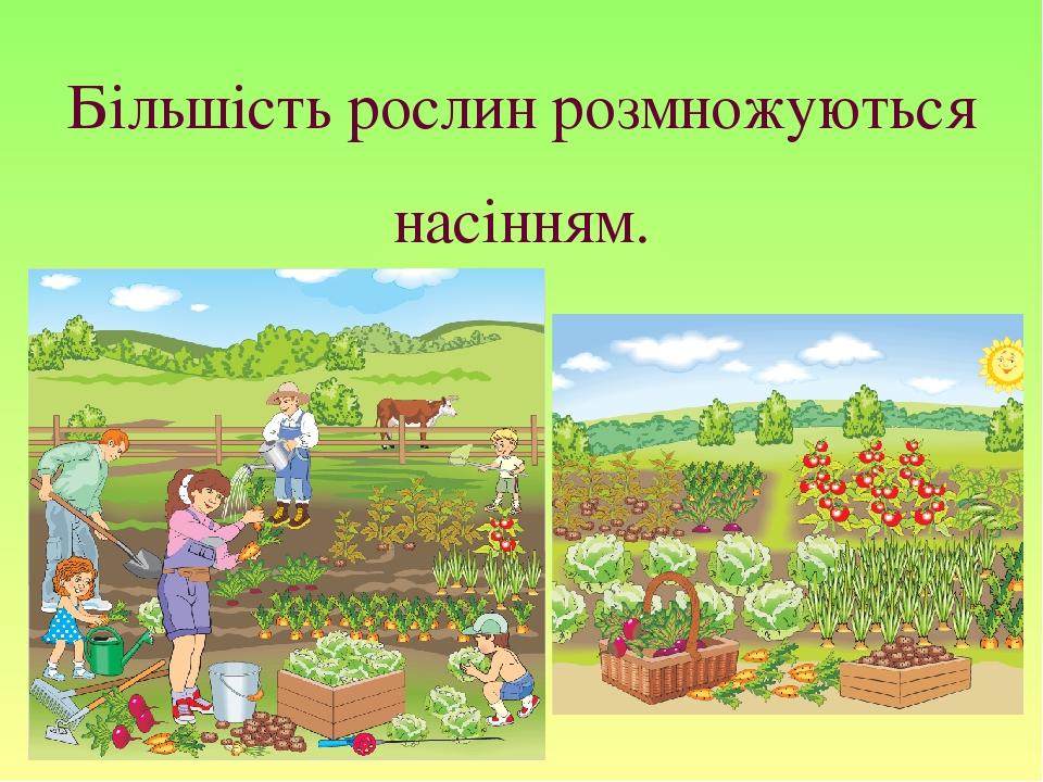 Більшість рослин розмножуються насінням.
