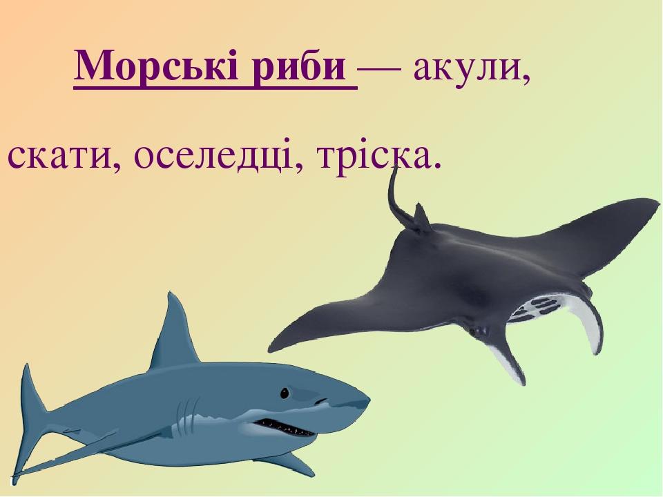Морські риби — акули, скати, оселедці, тріска.