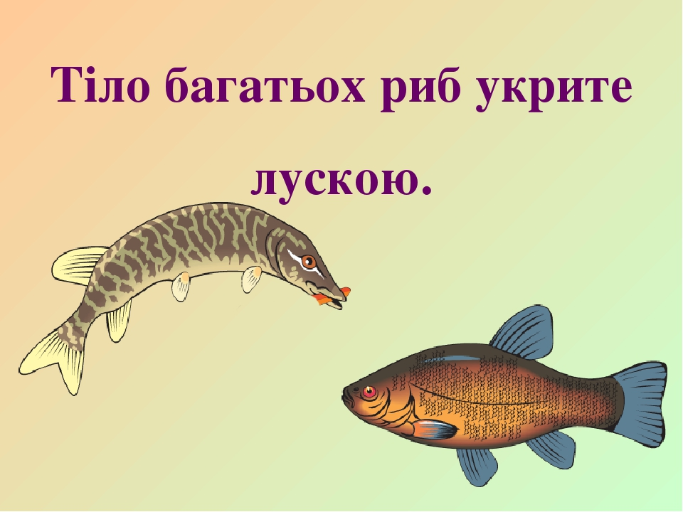 Тіло багатьох риб укрите лускою.
