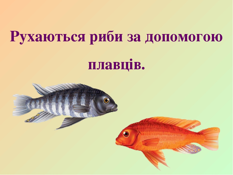 Рухаються риби за допомогою плавців.