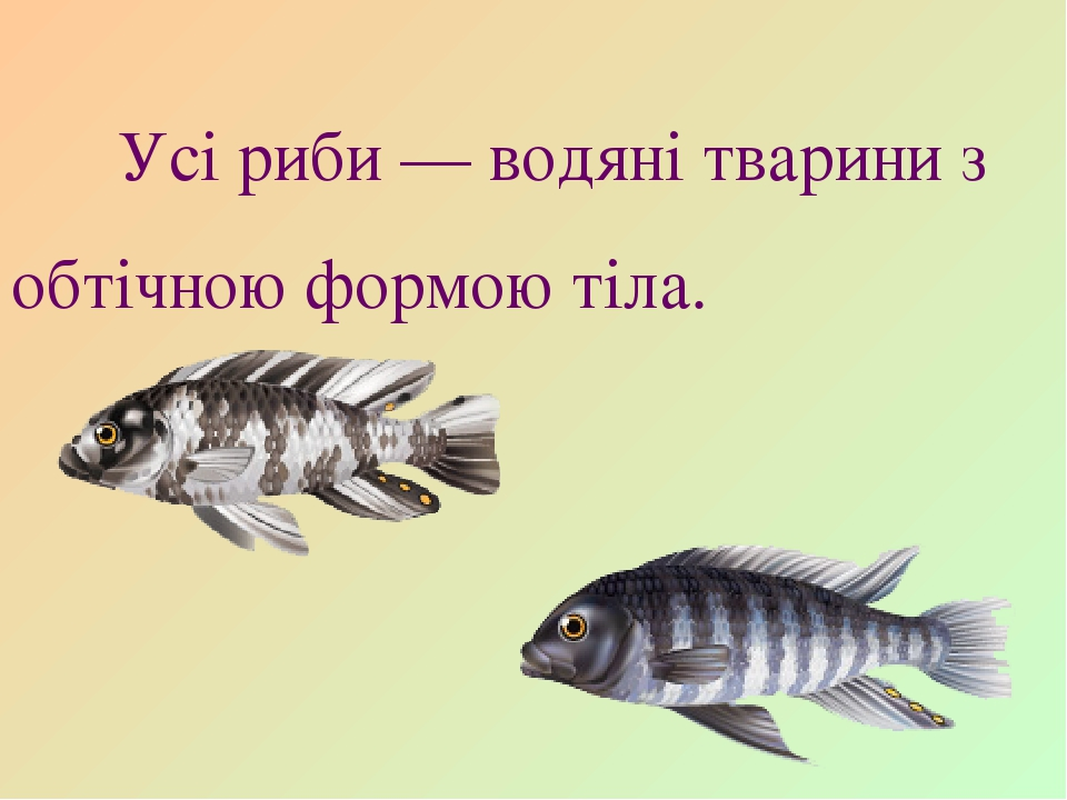 Усі риби — водяні тварини з обтічною формою тіла.