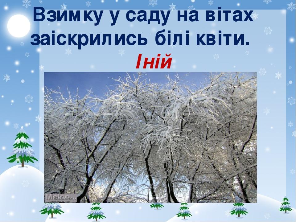 Взимку у саду на вітах заіскрились білі квіти. Іній