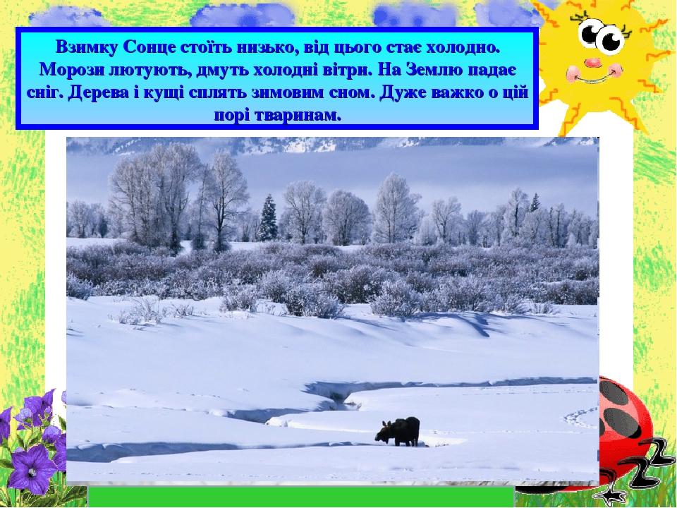 Взимку Сонце стоїть низько, від цього стає холодно. Морози лютують, дмуть холодні вітри. На Землю падає сніг. Дерева і кущі сплять зимовим сном. Ду...