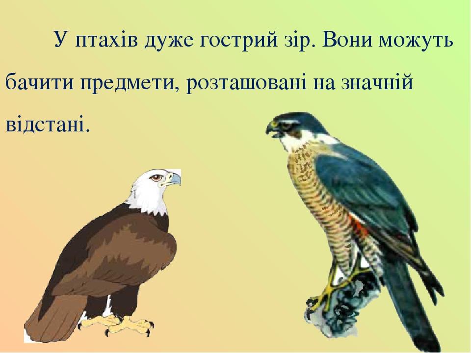 У птахів дуже гострий зір. Вони можуть бачити предмети, розташовані на значній відстані.