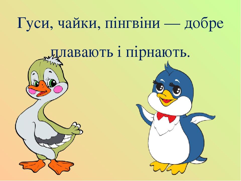 Гуси, чайки, пінгвіни — добре плавають і пірнають.