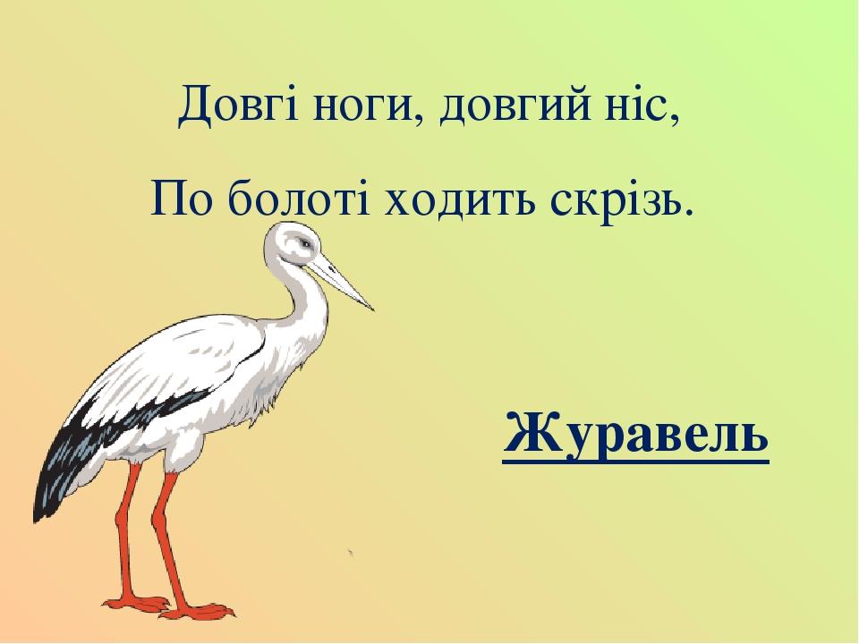 Довгі ноги, довгий ніс, По болоті ходить скрізь. Журавель