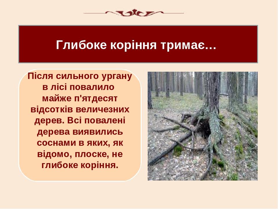 Глибоке коріння тримає… Після сильного ургану в лісі повалило майже п'ятдесят відсотків величезних дерев. Всі повалені дерева виявились соснами в я...