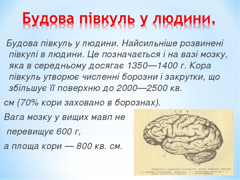Будова півкуль у людини. Найсильніше розвинені півкулі в людини. Це позначається і на вазі мозку, яка в середньому досягає 1350—1400 г. Кора півкул...