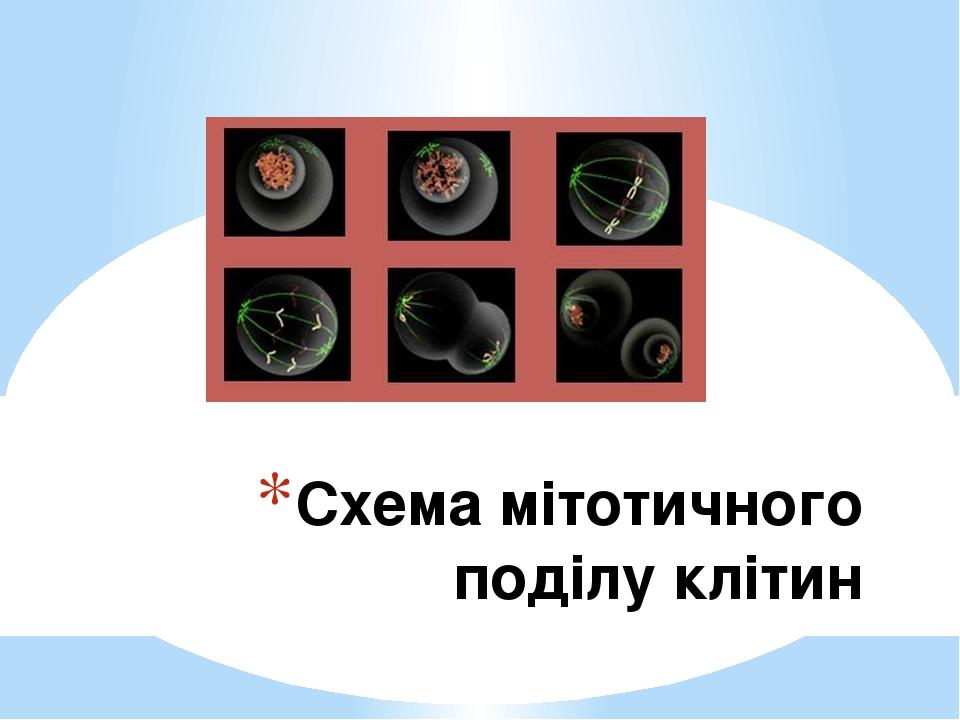 Схема мітотичного поділу клітин