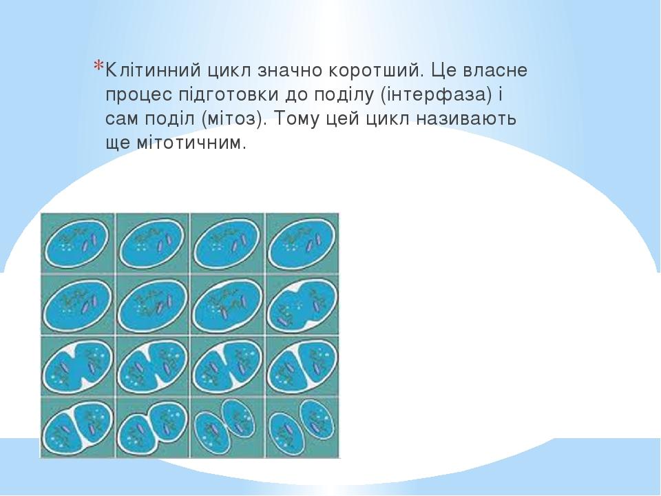 Клітинний цикл значно коротший. Це власне процес підготовки до поділу (інтерфаза) і сам поділ (мітоз). Тому цей цикл називають ще мітотичним.