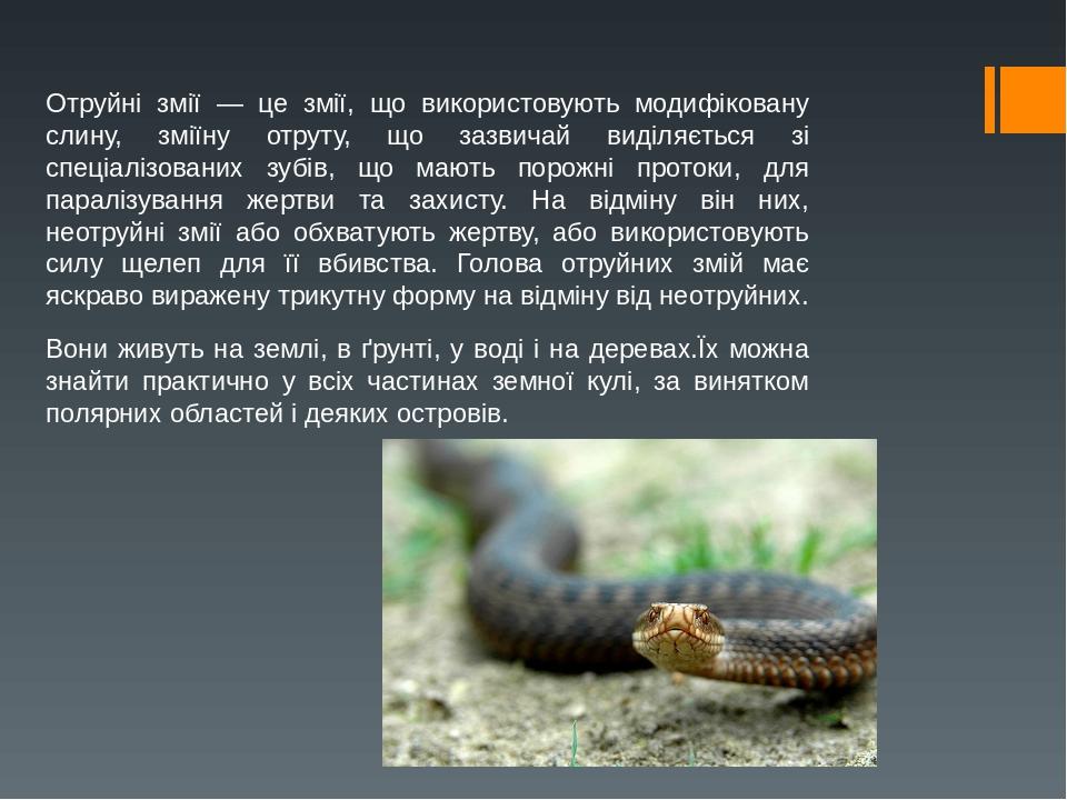 Отруйні змії — це змії, що використовують модифіковану слину, зміїну отруту, що зазвичай виділяється зі спеціалізованих зубів, що мають порожні про...