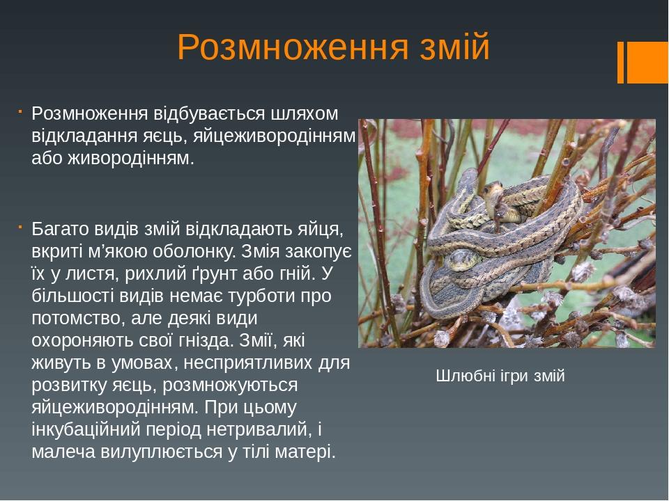 Розмноження змій Розмноження відбувається шляхом відкладання яєць, яйцеживородінням або живородінням. Багато видів змій відкладають яйця, вкриті м'...