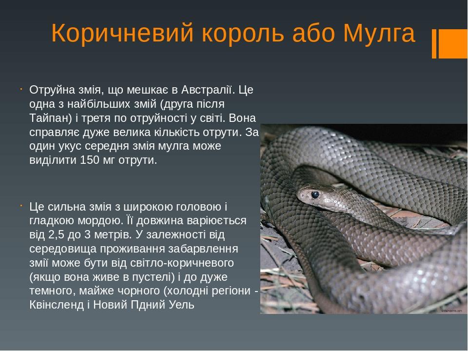 Коричневий король або Мулга Отруйна змія, що мешкає в Австралії. Це одна з найбільших змій (друга після Тайпан) і третя по отруйності у світі. Вона...