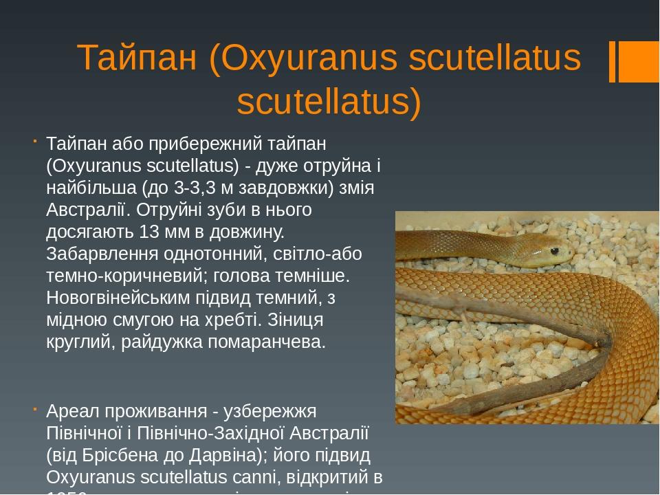 Тайпан (Oxyuranus scutellatus scutellatus) Тайпан або прибережний тайпан (Oxyuranus scutellatus) - дуже отруйна і найбільша (до 3-3,3 м завдовжки) ...