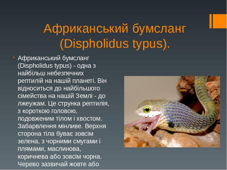Африканський бумсланг (Dіspholіdus typus). Африканський бумсланг (Dispholidus typus) - одна з найбільш небезпечних рептилій на нашій планеті. Він в...