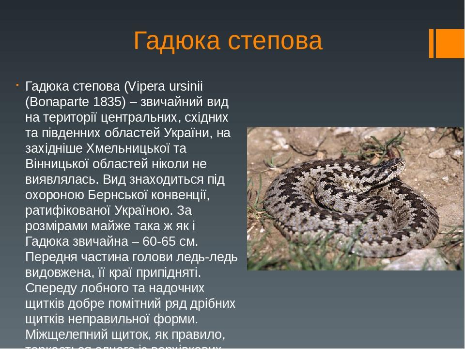 Гадюка степова Гадюка степова (Vipera ursinii (Bonaparte 1835) – звичайний вид на території центральних, східних та південних областей України, на ...