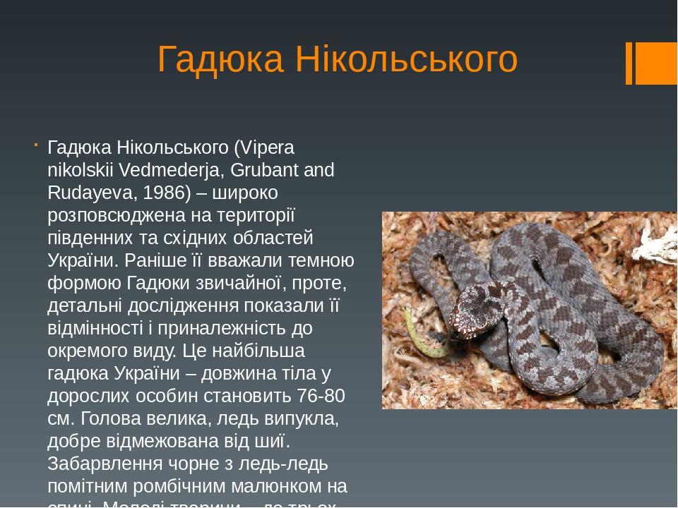 Гадюка Нікольського Гадюка Нікольського (Vipera nikolskii Vedmederja, Grubant and Rudayeva, 1986) – широко розповсюджена на території південних та ...