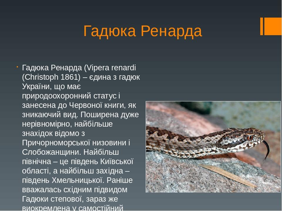 Гадюка Ренарда Гадюка Ренарда (Vipera renardi (Christoph 1861) – єдина з гадюк України, що має природоохоронний статус і занесена до Червоної книги...