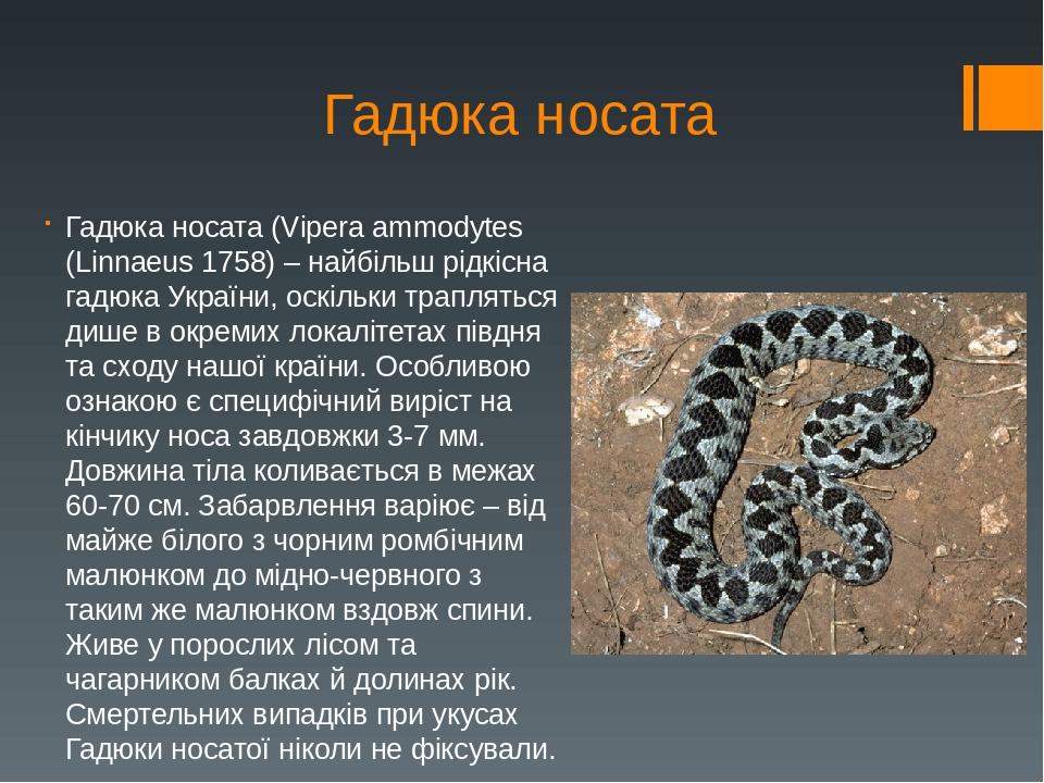 Гадюка носата Гадюка носата (Vipera ammodytes (Linnaeus 1758) – найбільш рідкісна гадюка України, оскільки трапляться дише в окремих локалітетах пі...