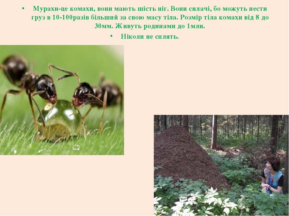 Мурахи-це комахи, вони мають шість ніг. Вони силачі, бо можуть нести груз в 10-100разів більший за свою масу тіла. Розмір тіла комахи від 8 до 30мм...
