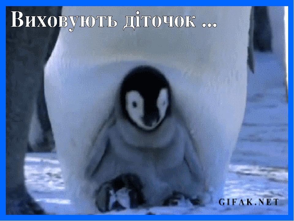 Картинках надписью, смешные гифки пингвины