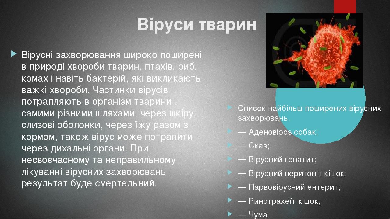 Віруси тварин Вірусні захворювання широко поширені в природі хвороби тварин, птахів, риб, комах і навіть бактерій, які викликають важкі хвороби. Ча...