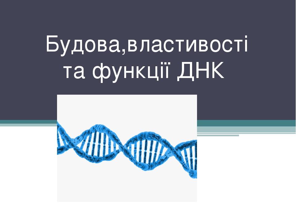 Будова,властивості та функції ДНК