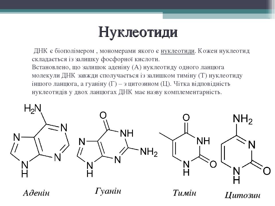 Нуклеотиди Аденін Гуанін Тимін Цитозин ДНК є біополімером, мономерами якого є нуклеотиди. Кожен нуклеотид складається із залишкуфосфорної кислоти...