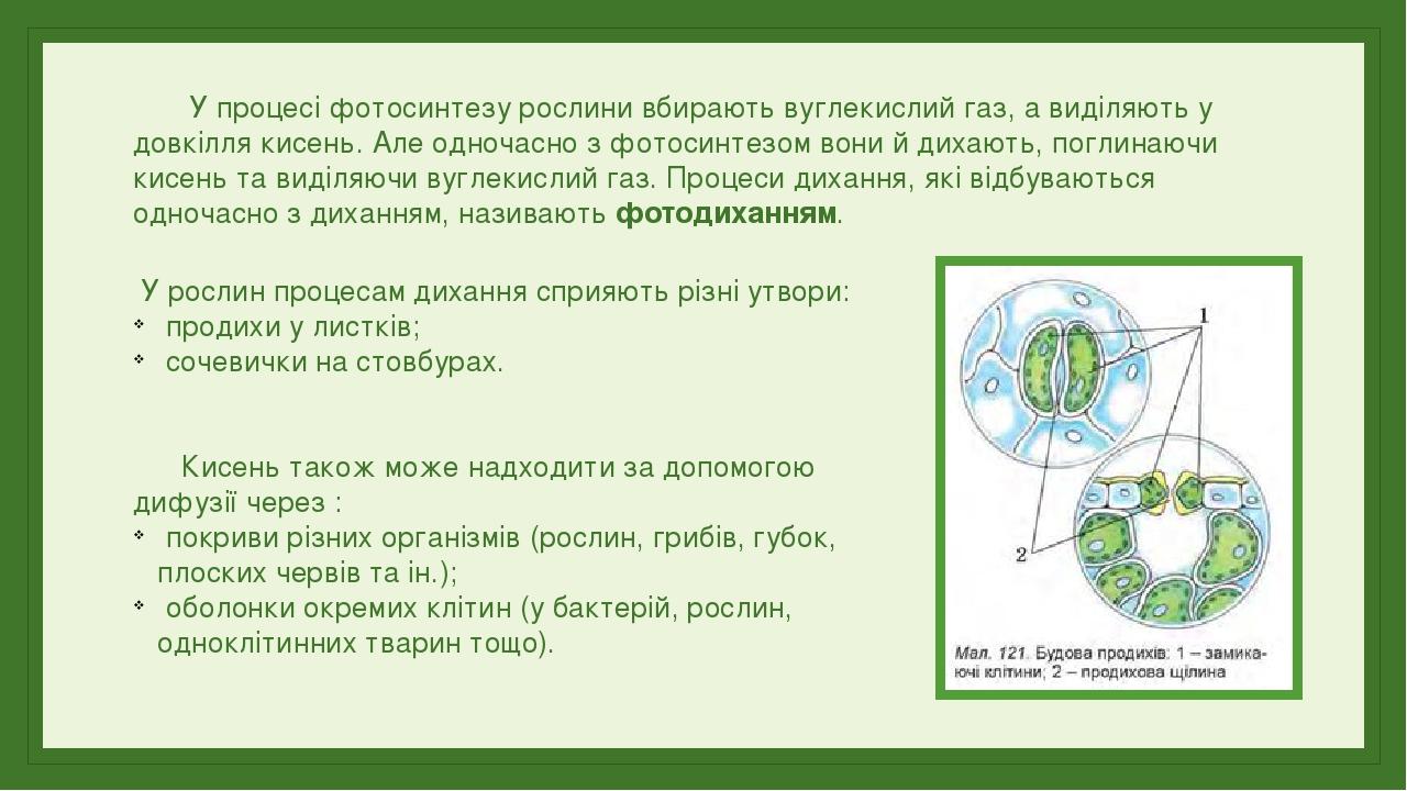 У процесі фотосинтезу рослини вбирають вуглекислий газ, а виділяють у довкілля кисень. Але одночасно з фотосинтезом вони й дихають, поглинаючи кисе...