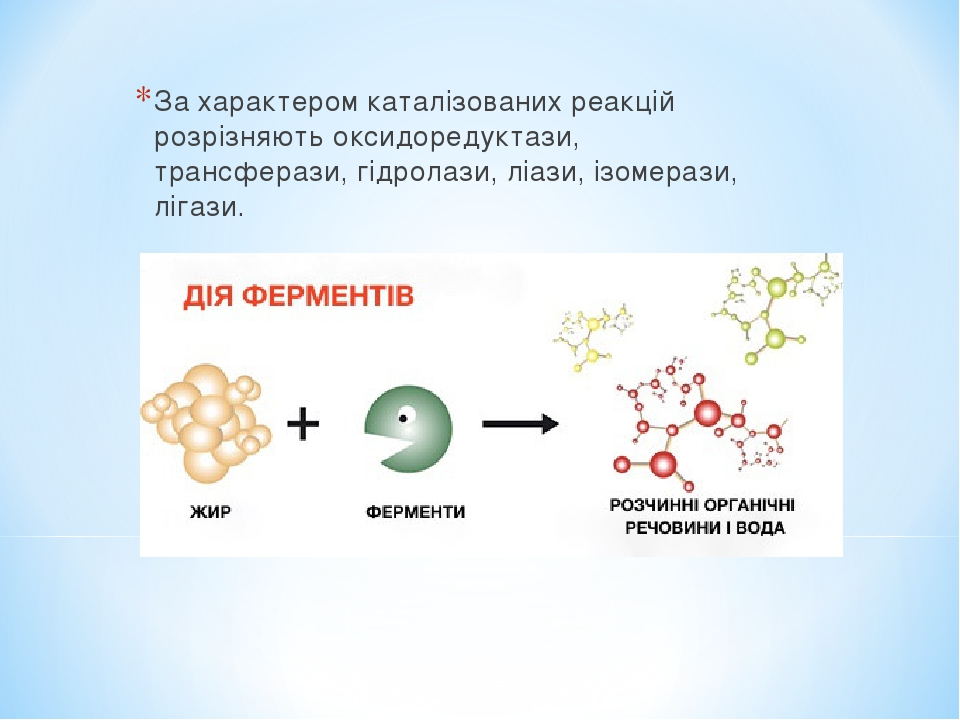 За характером каталізованих реакцій розрізняють оксидоредуктази, трансферази, гідролази, ліази, ізомерази, лігази.