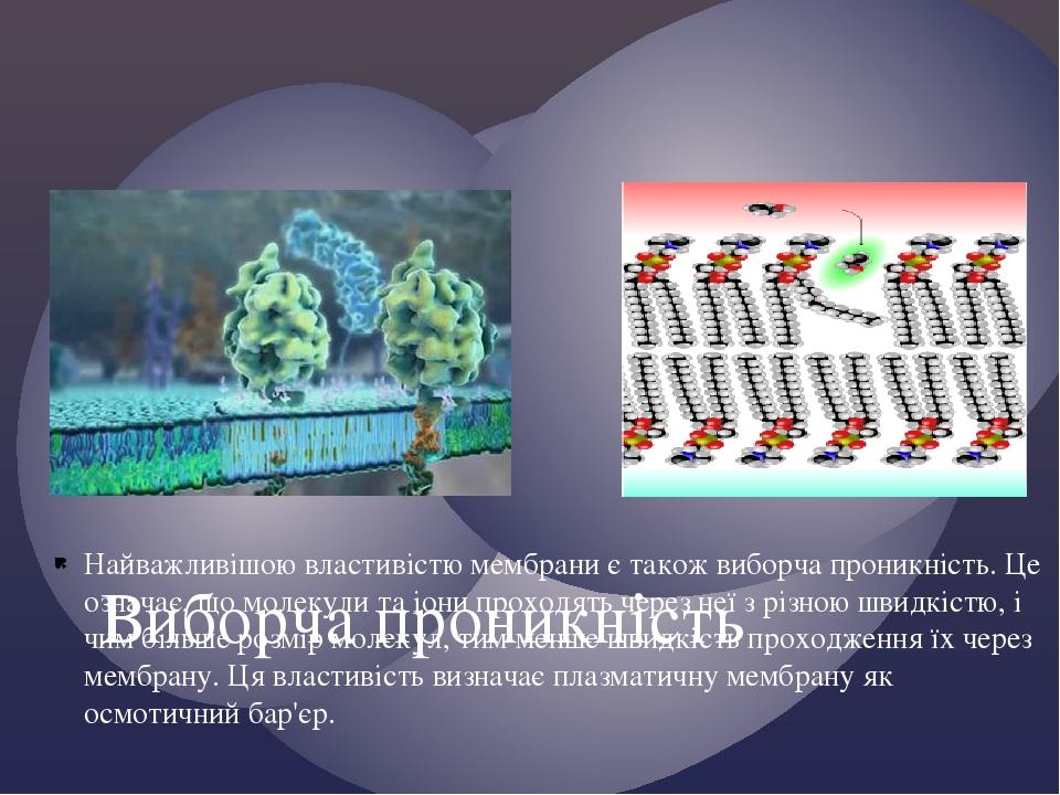 Найважливішою властивістю мембрани є також виборча проникність. Це означає, що молекули та іони проходять через неї з різною швидкістю, і чим більш...