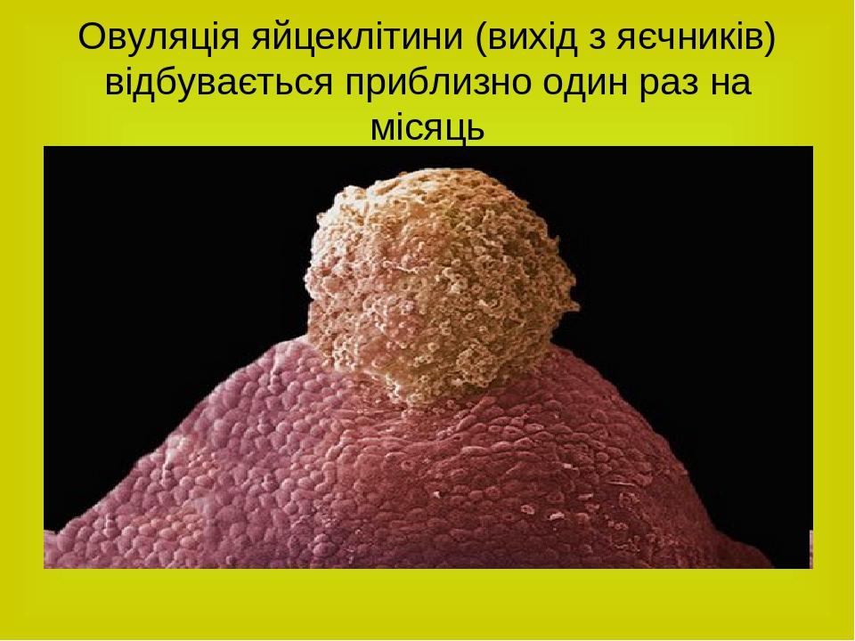 Овуляція яйцеклітини (вихід з яєчників) відбувається приблизно один раз на місяць