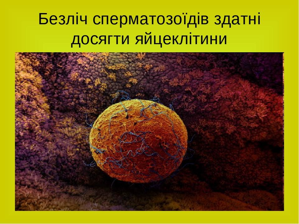 Безліч сперматозоїдів здатні досягти яйцеклітини