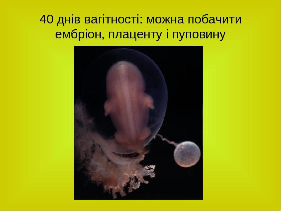 40 днів вагітності: можна побачити ембріон, плаценту і пуповину
