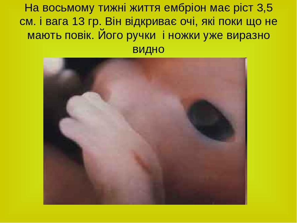 На восьмому тижні життя ембріон має ріст 3,5 см. і вага 13 гр. Він відкриває очі, які поки що не мають повік. Його ручки і ножки уже виразно видно