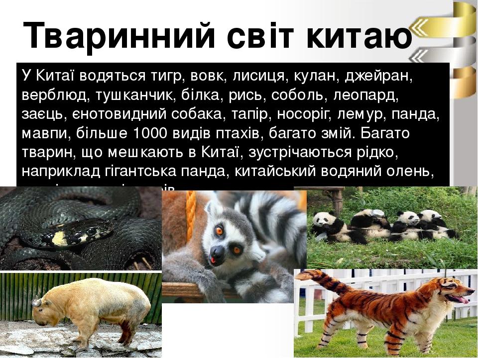 Тваринний світ китаю У Китаї водяться тигр, вовк, лисиця, кулан, джейран, верблюд, тушканчик, білка, рись, соболь, леопард, заєць, єнотовидний соба...